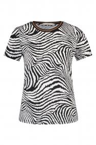 Aaiko alicia zebra
